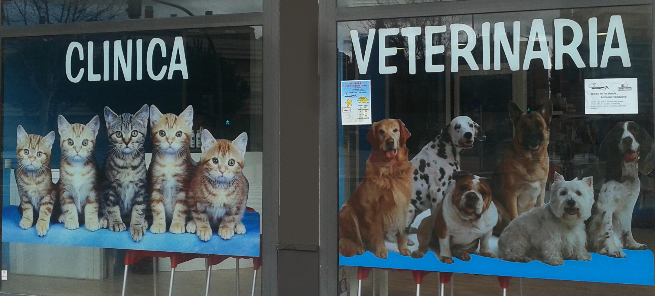 perros-gatos-imprenta-digital-palencia